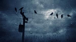 Rain-HD-Wallpapers